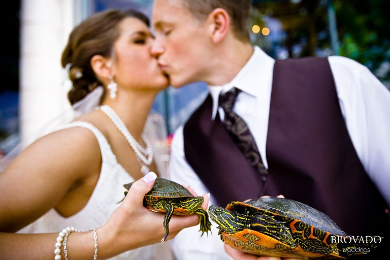 bride and groom kiss while holding turtles